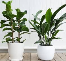 Best Plant For Bathroom by 10 Plants That Thrive In Humid Spots Your Bathroom Top 10