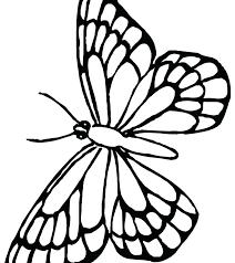 Amazing Butterfly Butterflies And Flowers For Adults Monarch Life Cycle Caterpillar To Coloring Pages Sheets Full
