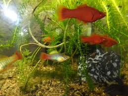 ICH Why the aquarium hobby is dying LISTEN PetCo and Petsmart