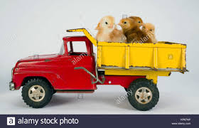 Baby Chicks Newborn Farm Chickens Ride Dump Truck Stock Photo ... Best Choice Products Kids Pedal Ride On Excavator Front Loader Truck Thats What Shes Reading Weekly Virtual Book Club For A John Deere Tractor Toys And Ons Product Talk Kiddie Ride Tonka Dump Truck Coin Op Item Is In Used Cdition Buy Caterpillar Online At Toyuniverse Australia Battery Powered Ride On Dump Truck Newcastle Tyne And Wear F9065f97 93ed 4467 B332 5574add1199e 1 Trucks Coloring 1f Belaz 75710 Worlds Largest Dump Skyscrapercity The Remote Controlled Inflatable Hammacher Schlemmer Toy Keystone Rideem Mfgd By Mfg Co Tipper Dumper W Bucket 12v Electric Tonka