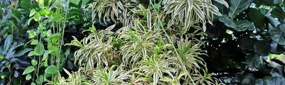 pflegeleichte zimmerpflanzen wie sie wirklich wenig arbeit