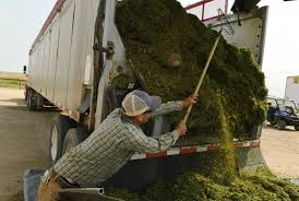 Going Into Its Fourth Harvest, Industrial Hemp Industry Still Facing ...