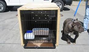 Restricted Breed Crate With Door Off