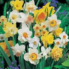 115 best bulbs i ve got to plant images on plant