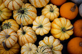 Pumpkin Patch Sf by San Francisco U0027s Best Pumpkin Patches