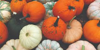 Pumpkin Patch College Station 2017 by Brazos Valley Pumpkin Patches Maroon Weekly