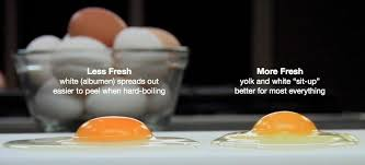 bad eggs float or sink how to tell if your expired eggs are still to eat food