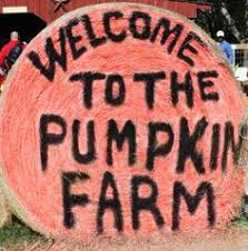 Maxwells Pumpkin Patch Amarillo Texas by Check Out Maxwell U0027s Pumpkin Farm In Amarillo Everything