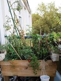 choisir le bon pot pour cultiver un potager sur balcon échoppe