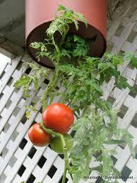 Vertical Gardening Roundup