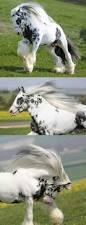 Denver International Airport Murals Horse by 209 Best Beauties Images On Pinterest Horses Beautiful Horses