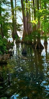alligator bayou lake update louisiana 14 best lake providence louisiana images on louisiana