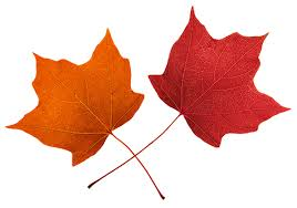 Fall leaves clip art beautiful autumn clipart 2