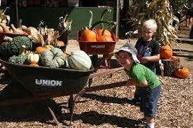 Oak Glen Pumpkin Patch Address by San Bernardino County California Pumpkin Patches Corn Mazes