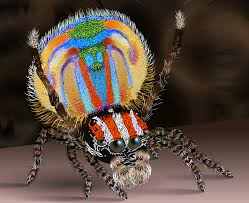 Spirit Halloween Jumping Spider by Cannibalism Ferrebeekeeper