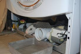 Bathtub Drain Clogged Black Stuff by Mold Inside Of Washing Machine Smells Horrible How To Fix