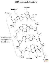 Método Científico Infografía Docencia Física Y Química