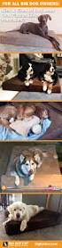 Big Dogs That Dont Shed Bad by 266 Best Animal Love Images On Pinterest Animals Dog And Puppies