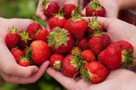 strawberry state red berry state symbols usa