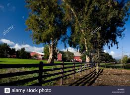 The Red Barn With Fence And Large Trees, Stanford University Stock ... Winter Workshop Gorgeous Day Pating At The Stanford Red Adventures Equestrian Center Jim Watkins Photography The Stock Farm Mkaz Filewesterpark Sterdam Gf 061jpg Wikimedia Commons Swish Architecture Swisharchitect Twitter Oklahoma National Register Properties Modern Barn By Design Pole Buildings Barn Builder Lester Listing 157 Conklin Hill Road Ny Mls 363443 An Urban Girl Hello Tootsie Carmel Valley Tony Melo Santa Cruz San Benito Monterey