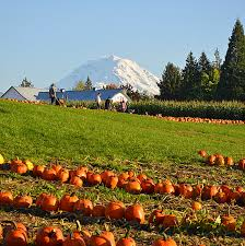 Spooner Farms Pumpkin Patch by October Guide To Gourds Ghouls And Good Fun In The South Sound