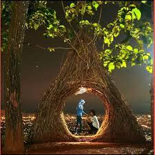 Amazing Hutan Pinus Jogja
