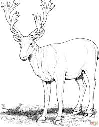 Amazing Design Deer Coloring Pages Caribou Page Free Printable