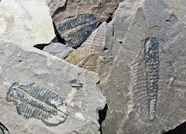 Ashfall Fossil Beds State Historical Park by 30 Most Impressive Fossil Sites In North America U2013 Top Value Reviews