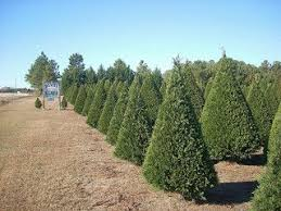 Elgin Christmas Tree Farm Pumpkin Festival by 246 Best Christmas Tree Lot Images On Pinterest December Farms