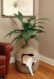 Plants In Bathroom Good For Feng Shui by 10 Feng Shui Cures You Have At Home Simple Feng Shui Tips