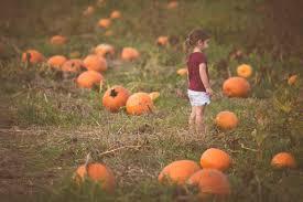 Pumpkin Patch Farms Nashville Tn by Home Grandaddy U0027s Farm