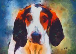 Do Treeing Walker Coonhounds Shed by Treeing Walker Coonhound Archives National Purebred Dog Day