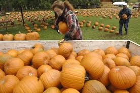Pumpkin Patches Maryland by Papa U0027s Pumpkin Patch Opens For The Season Local News For