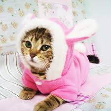 costume for cat easter bunny costume hooded coat fleece warm for cats pet
