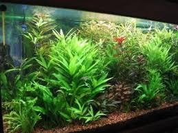 aquarium d eau douce premier aquarium le choix des poissons et des plantes