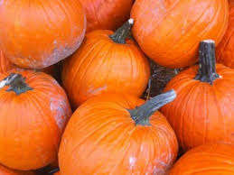 Local Pumpkin Farms In Nj patch picks pumpkin patches collingswood nj patch