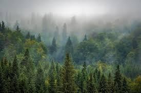 apa bedanya forest woods dan jungle dalam bahasa inggris