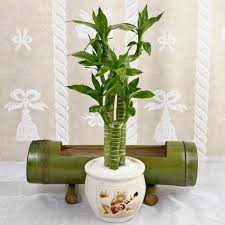Best Pot Plant For Bathroom by Indoor Plants Simple And Beautiful Garden Park