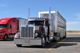 Another 379 Cattle Pot, This One A 379X For Livestock Services ... Winners Meats Winner Trucking Livestock Hauling Otis Colorado Philip Sims Llc Small Truck Big Service Ordrive Owner Operators Oct 20 Coalville Ut To Brigham City Johnson Home American Driver Jobs Faces Of Agriculture August 2012 Grain Best Truck 2018 I29 In Iowa With Rick Pt 13 Eld Trucking Mandate Could Cost Livestock Producers Bismarck