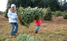 Types Of Christmas Trees To Plant by Common Christmas Tree Bugs And How To Get Rid Of Them