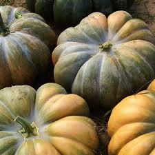 Eden Organic Pumpkin Seeds Where To Buy by Pumpkin Seeds Musquee De Provence