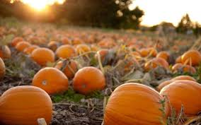 Pumpkin Patches Around Fort Worth Tx by How Is It October U0027s Been A Record Breaker In North Texas