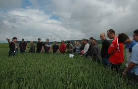 chambre d agriculture de la meuse réduire les phyto et le stock semencier cultivar
