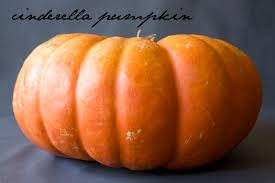 Types Of Pumpkins And Squash by Winter Squash A Guide Delightful Delicacies