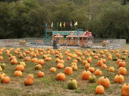 Pumpkin Patch Near Bay Area by Pumpkin Patch Picks Where To Find Your Pumpkin Castro Valley