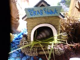 Do Hermit Crabs Shed Their Whole Body by Education Anakalian Whims