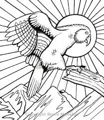 From Amazing Animals Of New Zealand Coloring Book