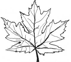 Download Coloring Pages Maple Leaf Page Fresh On Style