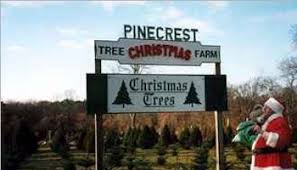 Pinecrest Christmas Tree Farm by Christmas Home Page