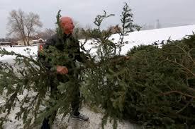 Christmas Tree Disposal Nyc tis the season to recycle the christmas tree deseret news